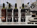 Viticulture-Oenology-Pomology : Professional study of Viticulture-Oenology-Pomology :